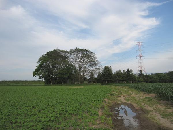 無農薬大豆畑