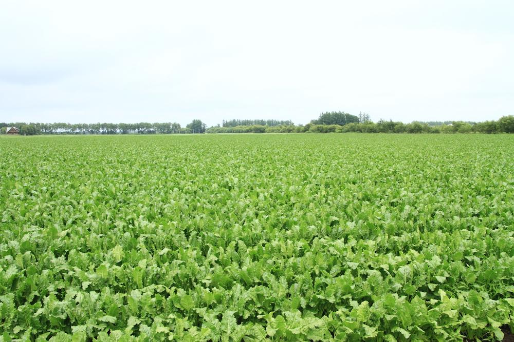 無農薬大豆