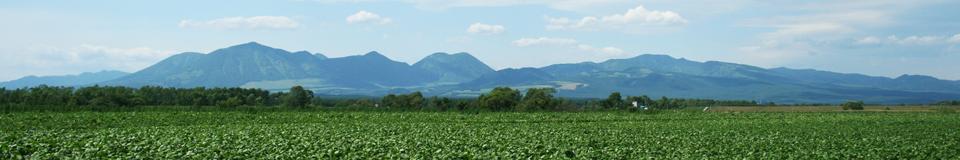 北海道の山々と大豆畑