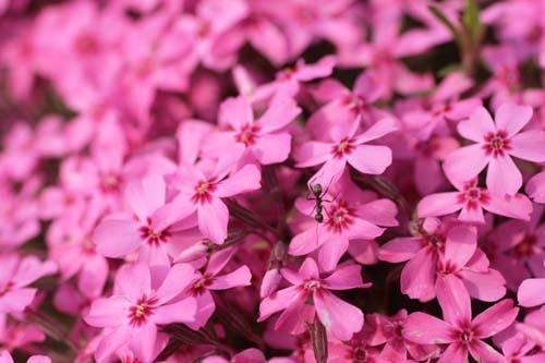 080523花